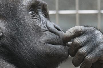 singe qui réfléchi pour illustrer comment choisir ses sites d'emploi pour le multiposting